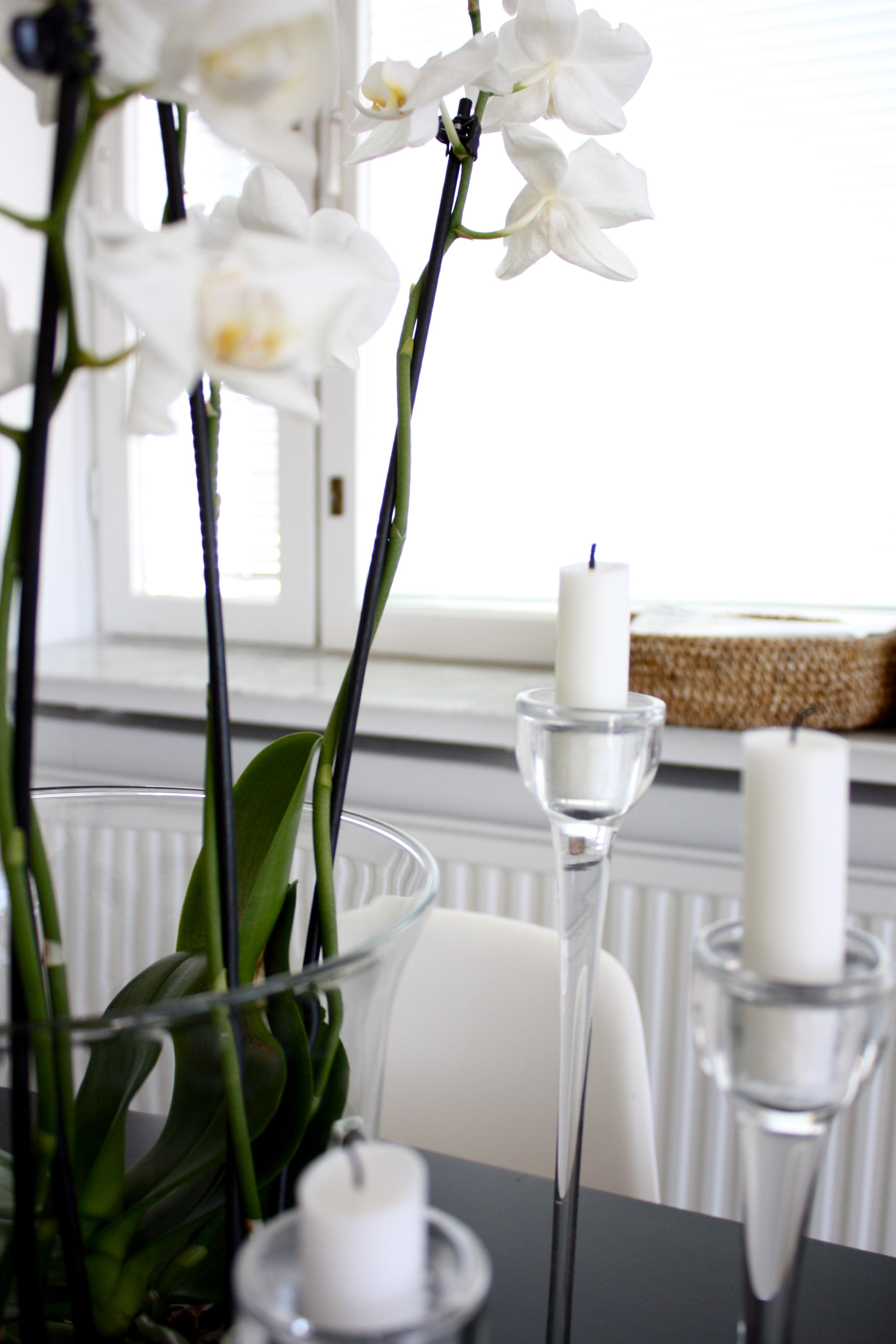 homevialaura_keittiö_3